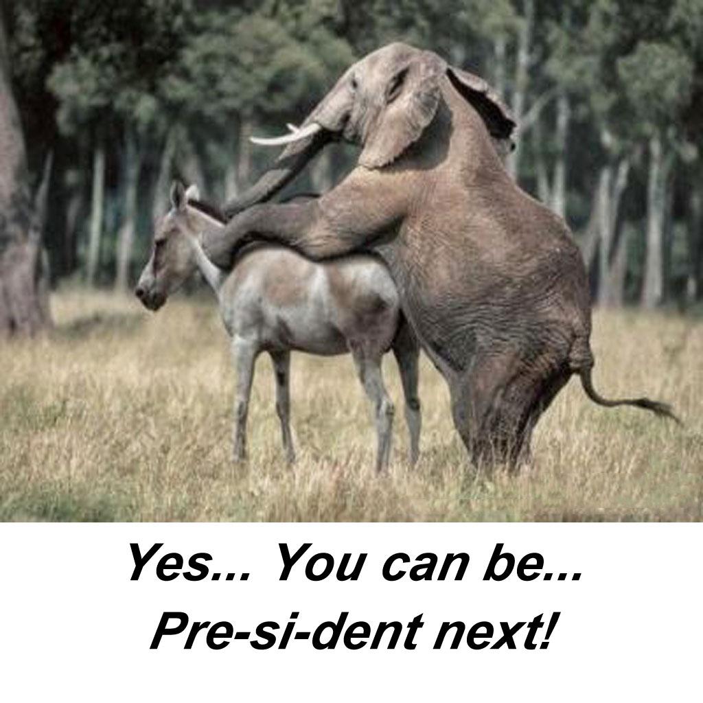sttpml Next President